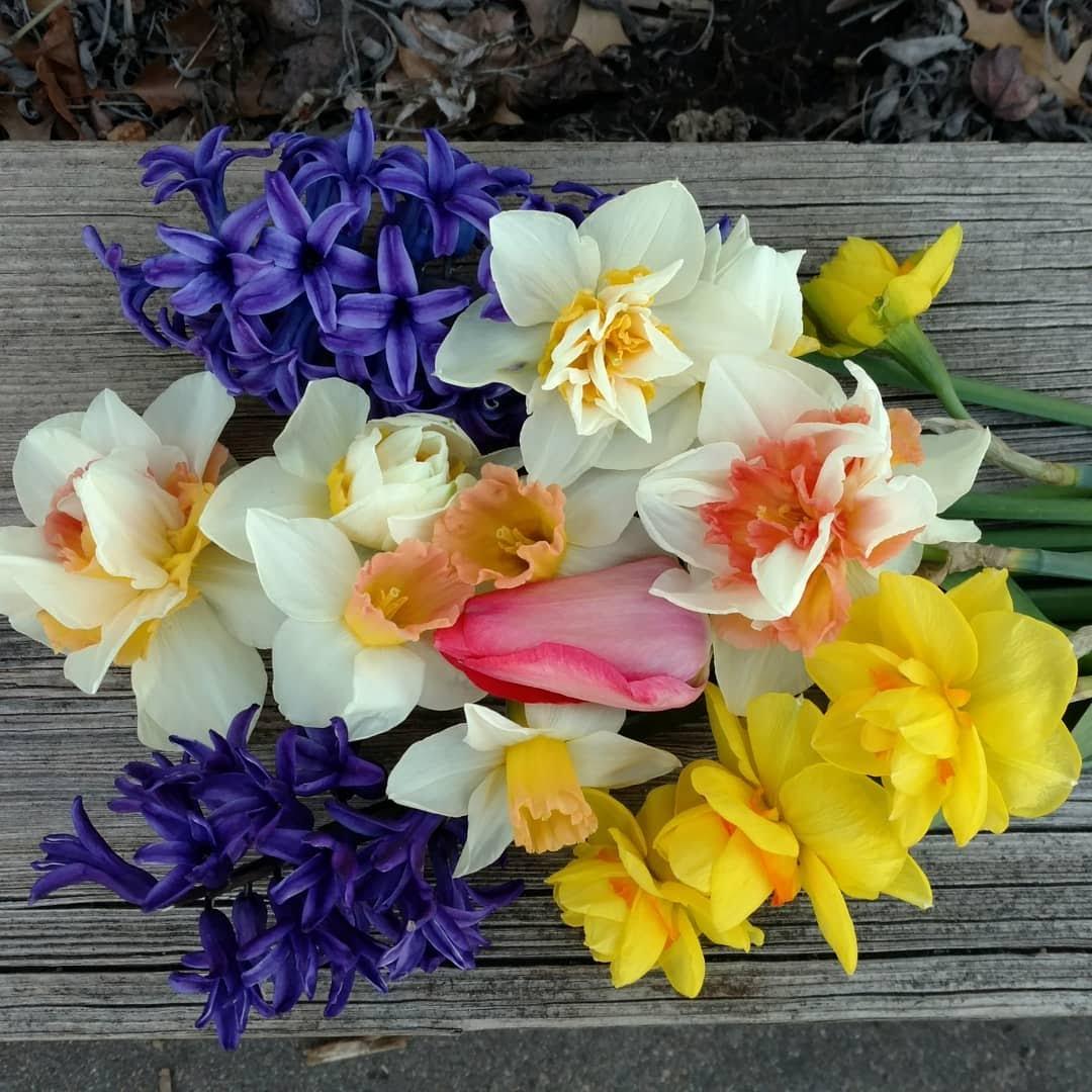 April 2018 Flowers